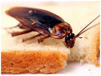убить насекомых ташкент