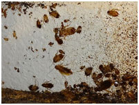 дезинфекция от тараканов в квартирах