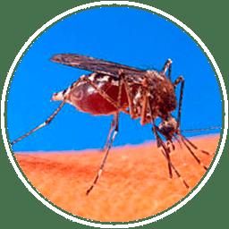 убить комаров
