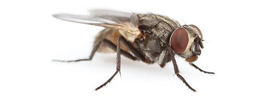 уничтожение мух в ташкенте