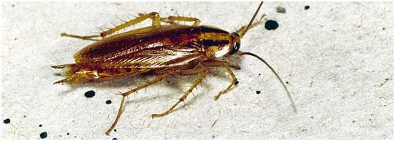 убить тараканов в ташкенте