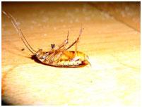 уничтожение паразитов в ташкенте