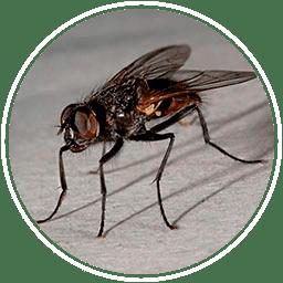 убить мух