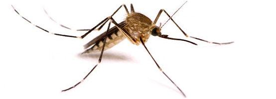 уничтожение комаров в ташкенте