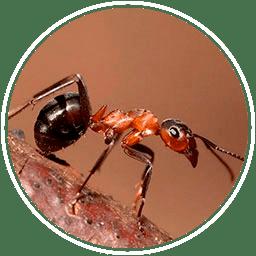 убить муравьев